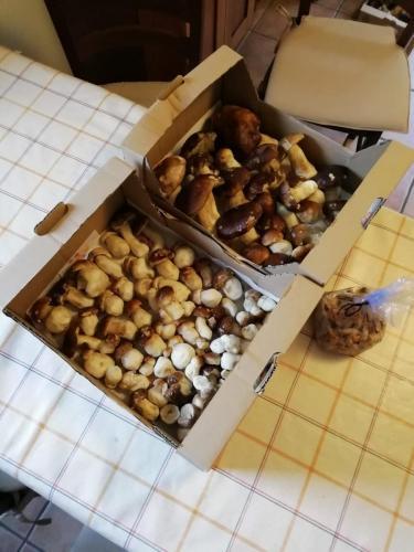 Festa del Fungo